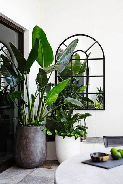 piante in casa per aria pura