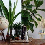 piante in casa